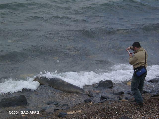 Yeşim Hasta fok Aliağa ©2004 SAD-AFAG