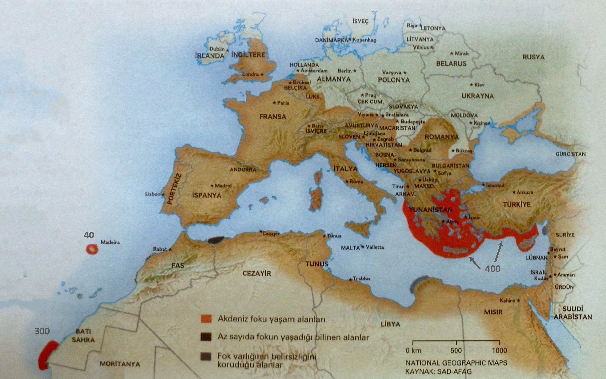 Akdeniz Foku Sad Afag