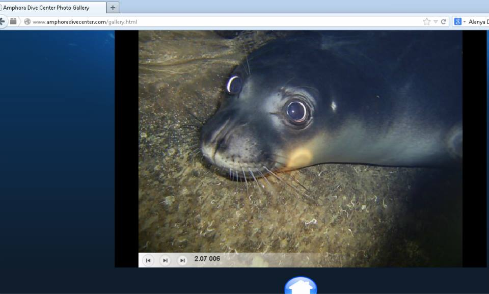 Monk seal disturbance in the sea cave in Alanya 2014 (2)