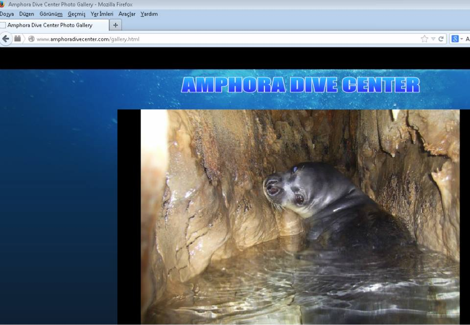 Monk seal disturbance in the sea cave in Alanya 2014